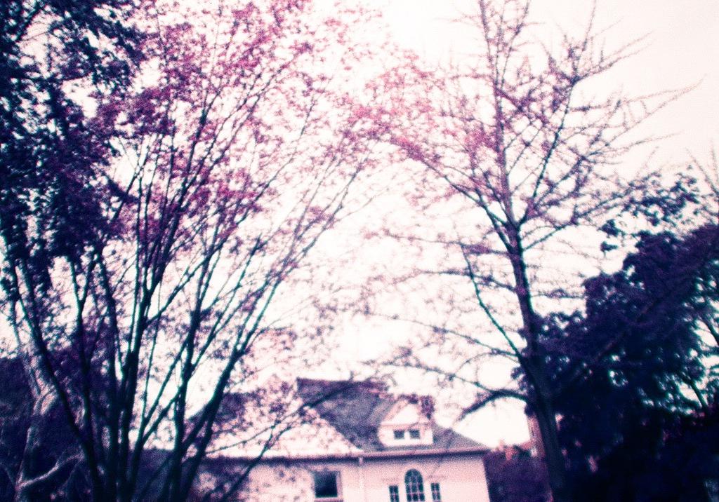 the house admist flowers