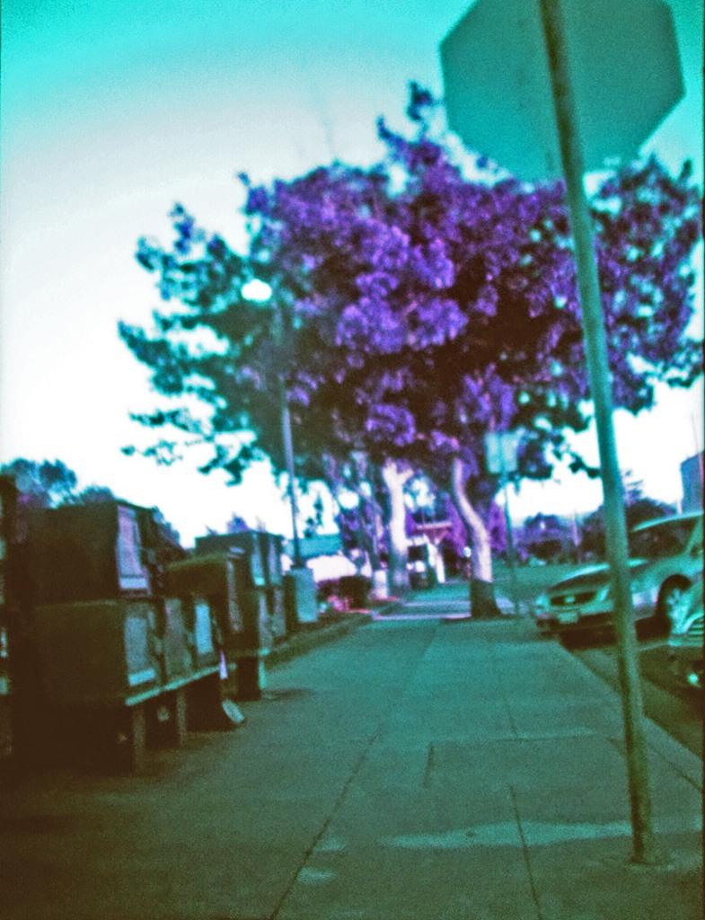 A giant purple tree